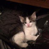 Отдам котят в добрые руки!!!. Фото 3.