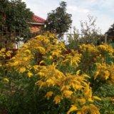 Садовые многолетники бесплатно. Фото 2.