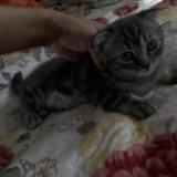 Продам котенка. Фото 2.