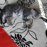 Продам котенка. Фото 3.