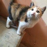 Котёнок. Фото 1.