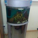 Аквариум с рыбами. Фото 2.