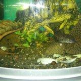 Аквариум с рыбами. Фото 4.