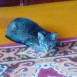 Кошечка 4 мес. Фото 2. Братск.