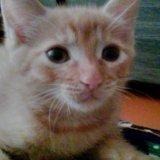 Кот 2,5 месяца. Фото 1. Улан-Удэ.