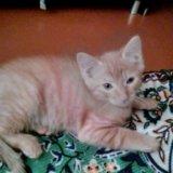 Кот 2,5 месяца. Фото 2. Улан-Удэ.