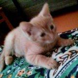 Кот 2,5 месяца. Фото 3. Улан-Удэ.