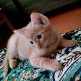 Кот 2,5 месяца. Фото 4. Улан-Удэ.