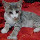 Отдам котика. Фото 1.