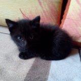 Котенок. Фото 1. Томск.