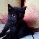 Котенок. Фото 2. Томск.