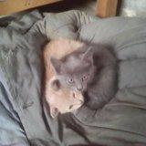 Котята. Фото 1. Старый Оскол.