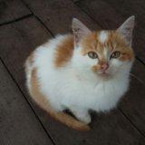 Рыжий котенок ищет дом. Фото 3.