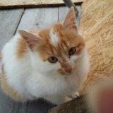 Рыжий котенок ищет дом. Фото 4.
