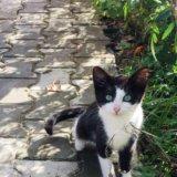 Котята бесплатно в добрые руки. Фото 2.