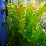 Аквариумные растения. Фото 2.