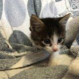 Кошечка в добрые руки. Фото 3. Волгоград.