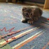 Продам котенка. Фото 1.