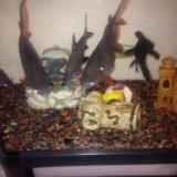 Аквариум с рыбами. Фото 1. Владикавказ.