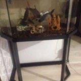 Аквариум с рыбами. Фото 2. Владикавказ.