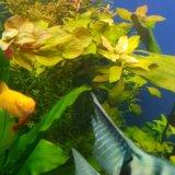 Аквариумные растения. Фото 3.