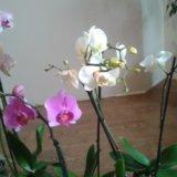 Орхидеи. Фото 1.