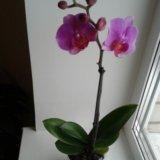 Орхидеи. Фото 2.