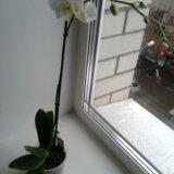 Орхидеи. Фото 3.