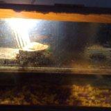 Красноухая черепаха + аквариум. Фото 4.
