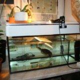 Аквариум с черепахой. Фото 3.
