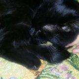 Добрый котик. Фото 1.