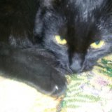 Добрый котик. Фото 2.