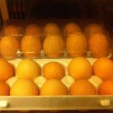Яйца куриные деревенские. Фото 1.