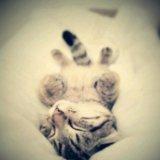 Передежка животных. Фото 1.