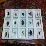 Калекция  насекомых. Фото 1. Ахтубинск.
