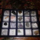 Калееция камней. Фото 1.