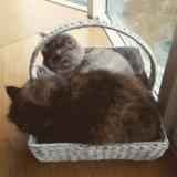Кошки-подружки. Фото 1.
