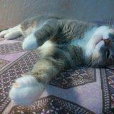 Кот в добрые руки. Фото 1. Екатеринбург.