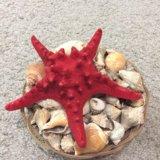 Морская звезда и ракушки. Фото 1.
