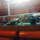 Аквариум для черепахи. Фото 4. Москва.
