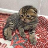 Плюшевые котятки. Фото 1. Малоярославец.