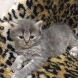 Плюшевые котятки. Фото 2.