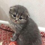 Плюшевые котятки. Фото 3. Малоярославец.