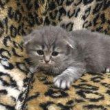 Плюшевые котятки. Фото 4.