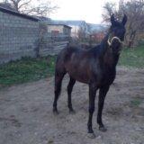 Продам коня. Фото 1.