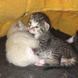 Отдам в дар котят в добрые руки. Фото 1. Ногинск.