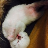 Отдам в дар котят в добрые руки. Фото 4. Ногинск.
