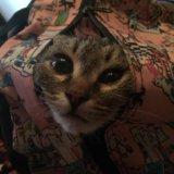 Котеночек кузя в добрые руки. Фото 1. Волгоград.