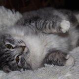 Животные в добрые руки, кошки бесплатно. Фото 1.