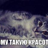 Животные в добрые руки, кошки бесплатно. Фото 3.